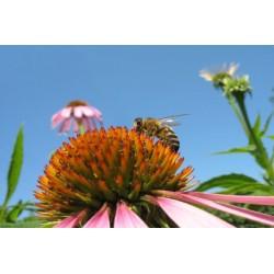 Miel Bio toutes fleurs - Pot de 500 gr